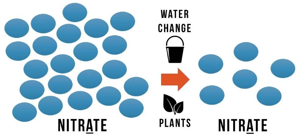 چرخه نیتروژن