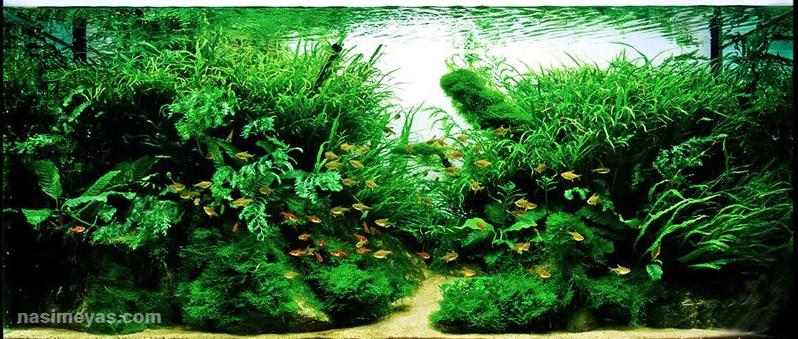 دکوراسیون یک آکواریوم گیاهی