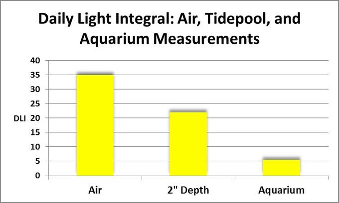 شدت نور در رشد مرجان ها