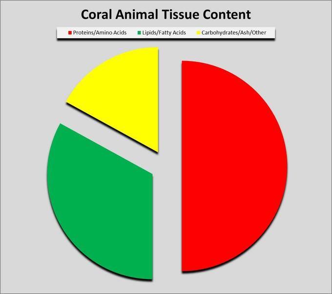 پروتئین ها می توانند به اندازه ی ۵۰ درصد یا بیشتر از بافت نرم مرجانی را تشکیل دهند