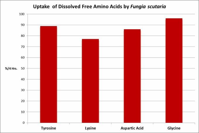 مرجان سنگی Fungia scutaria قادر به جذب آمینو اسید ها از ستون آب است