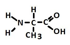 آلانین یک اسید آمینه فراوان ساخته شده توسط zooxanthellae