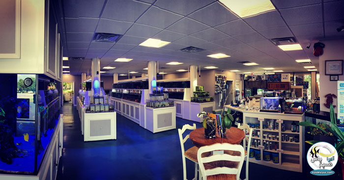 Local Fish Store (LFS)