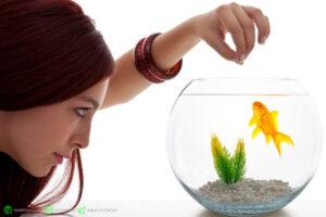 چه زمان و چه مقدار باید به ماهیهایتان غذا دهید؟