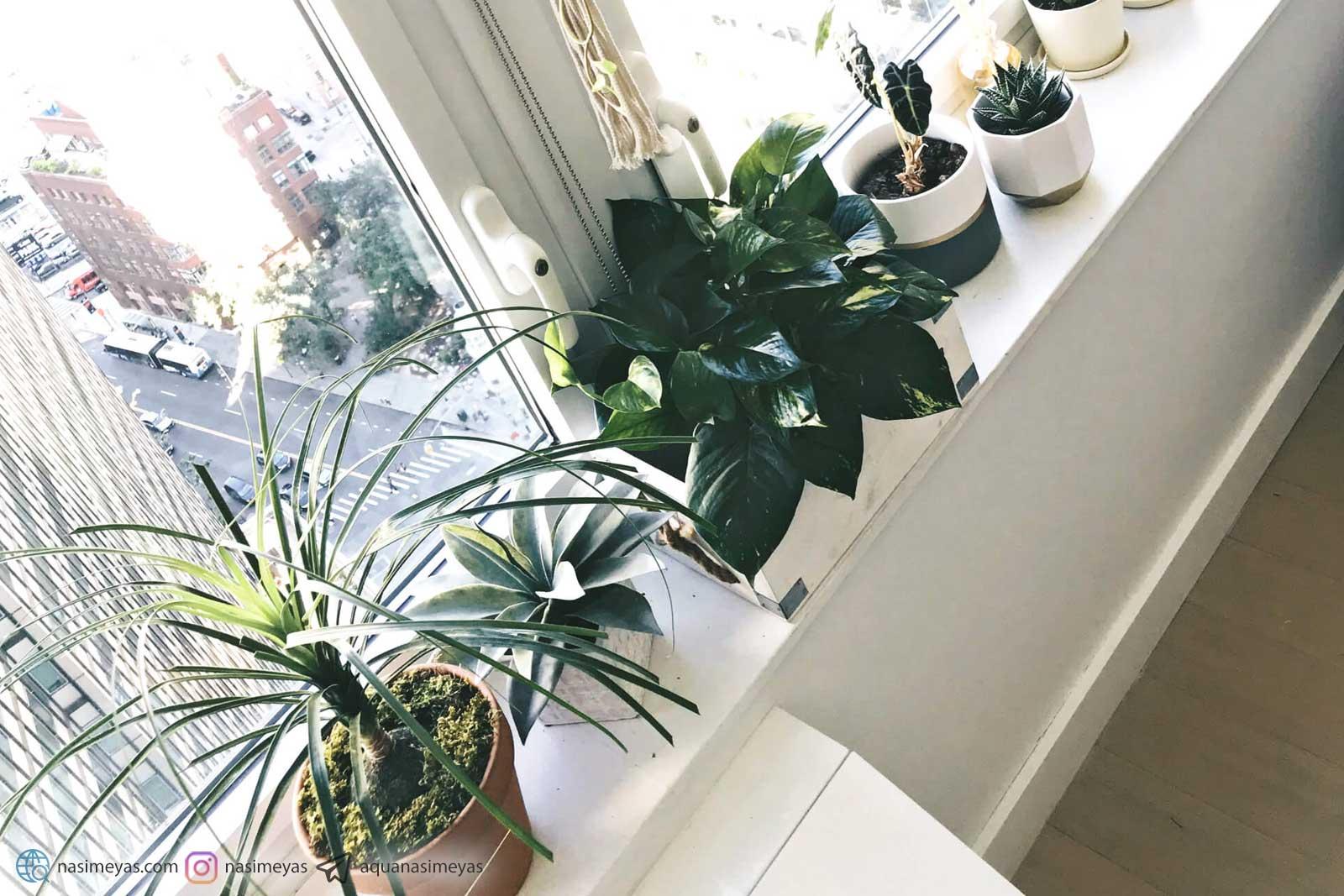 فواید نگهداری از گیاهان در آپارتمان و منزل