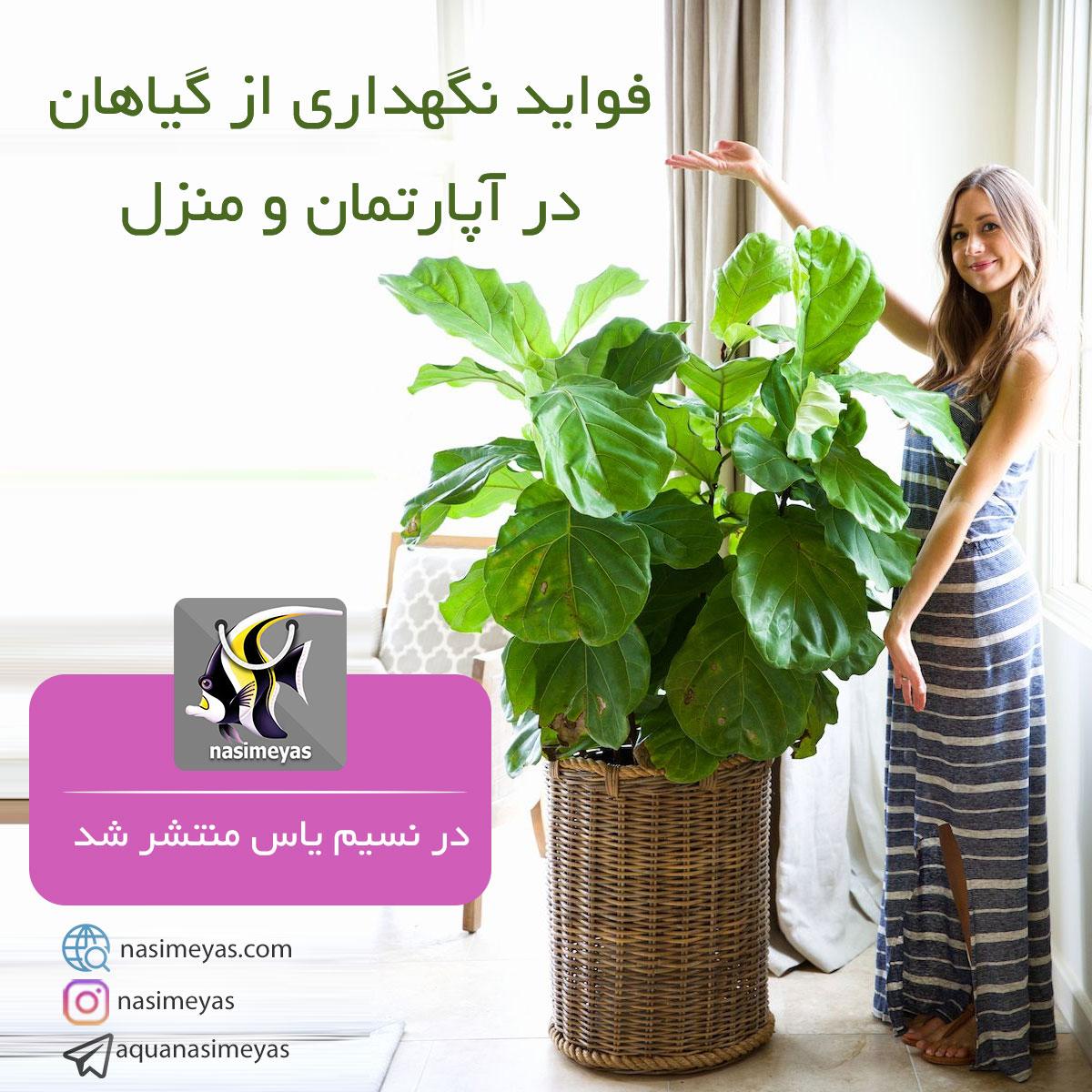 مراقبت از گیاهان هوشمند و نکات آسان نگهداری