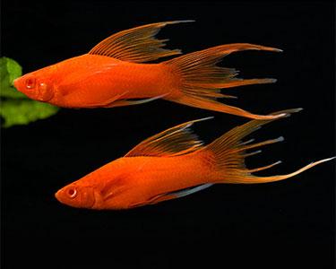 دلیل پرش ماهی ها از آب
