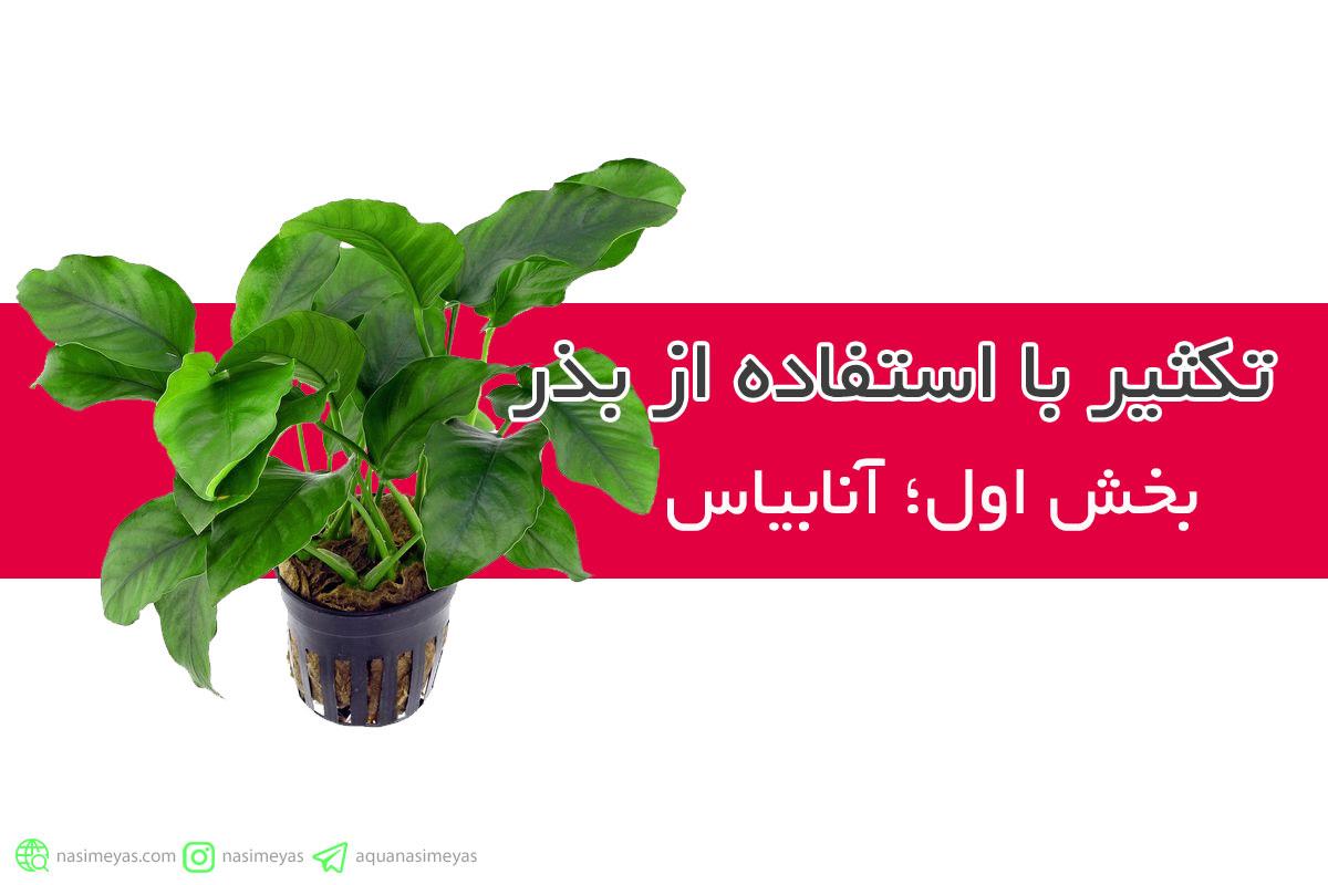 تکثیر با استفاده از بذر ، بخش اول : آنابیاس