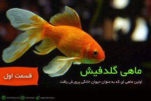 ماهی گلدفیش ،اولین ماهیای که به عنوان حیوان خانگی پرورش یافت! – قسمت اول