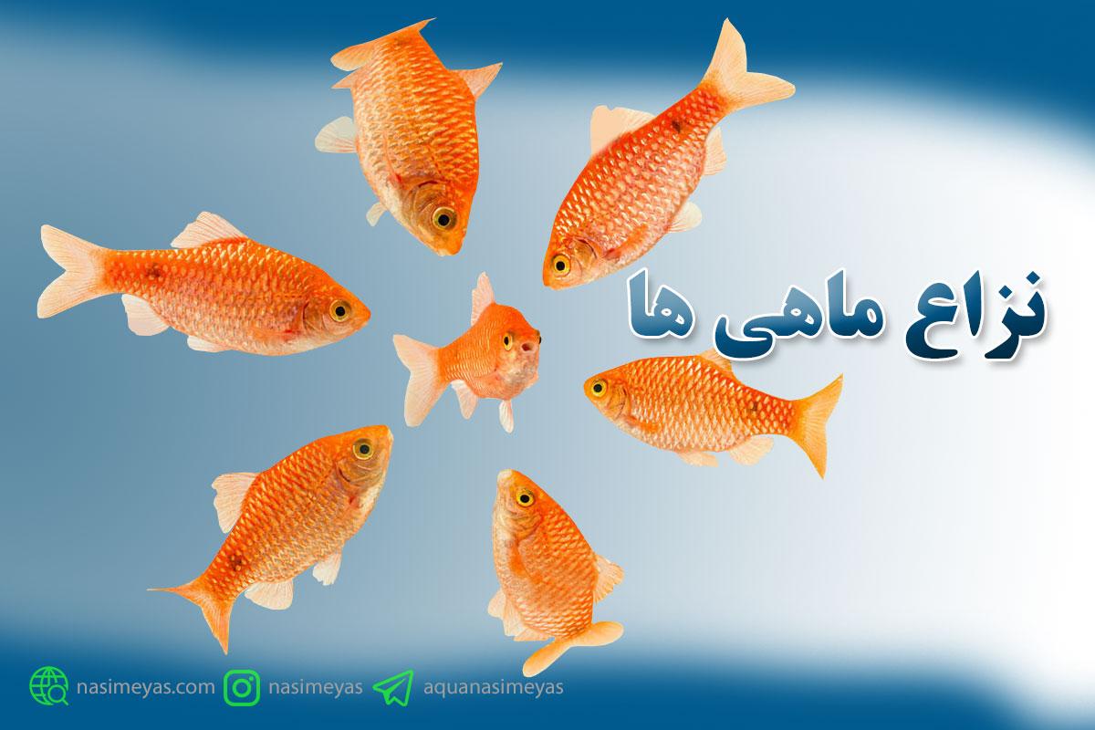 مقاله نزاع ماهی ها