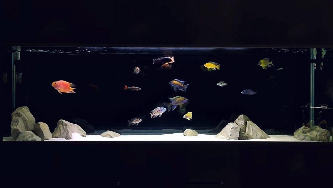 پنج نکته برای دستیابی به آبی شفاف و کریستالی در آکواریوم