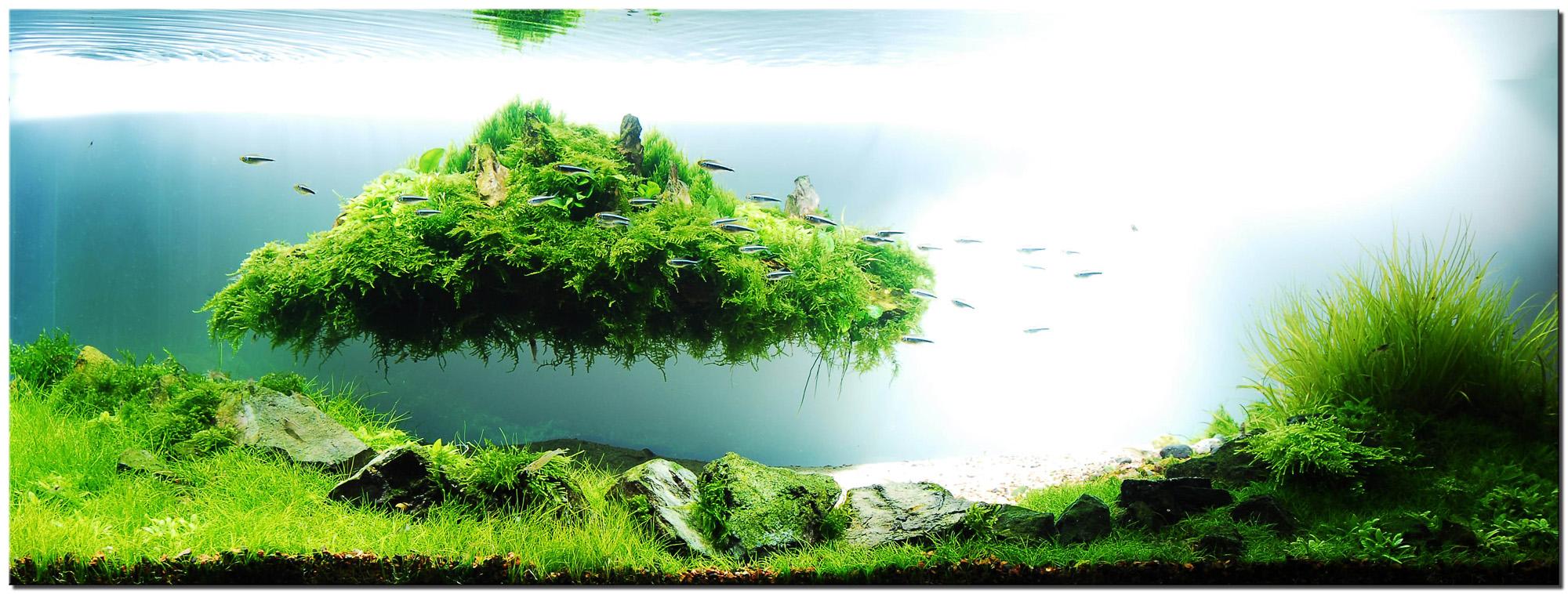 انتخاب گیاهان آکواریومی ,چگونکی استفاده از رنگ در تانک گیاهی