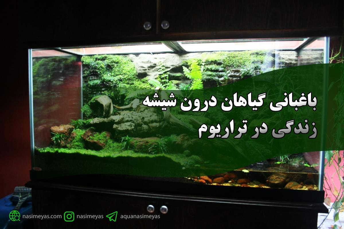 باغبانی گیاهان درون شیشه: زندگی در تراریوم
