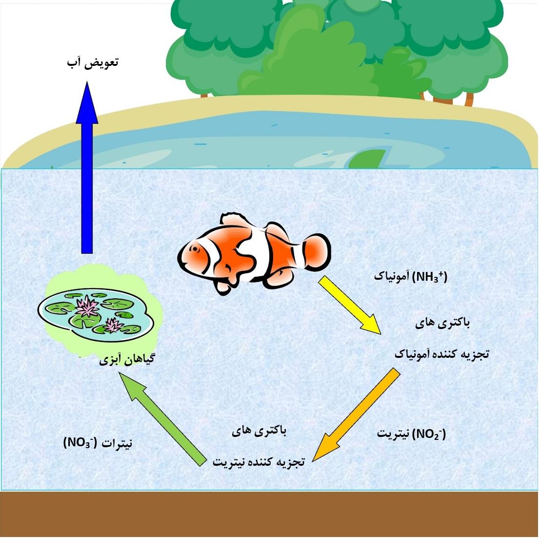 نسخه ساده سازی شده سیکل نیتروژن