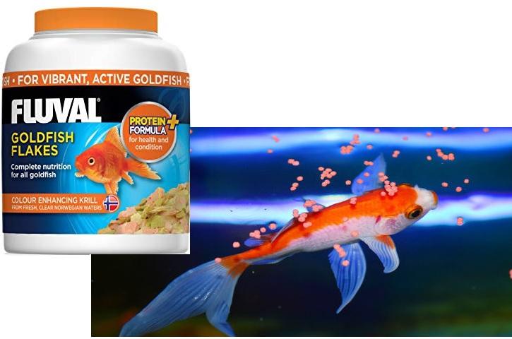 استفاده از غذاهای با کیفیت در سلامت ماهی بسیار موثر است.