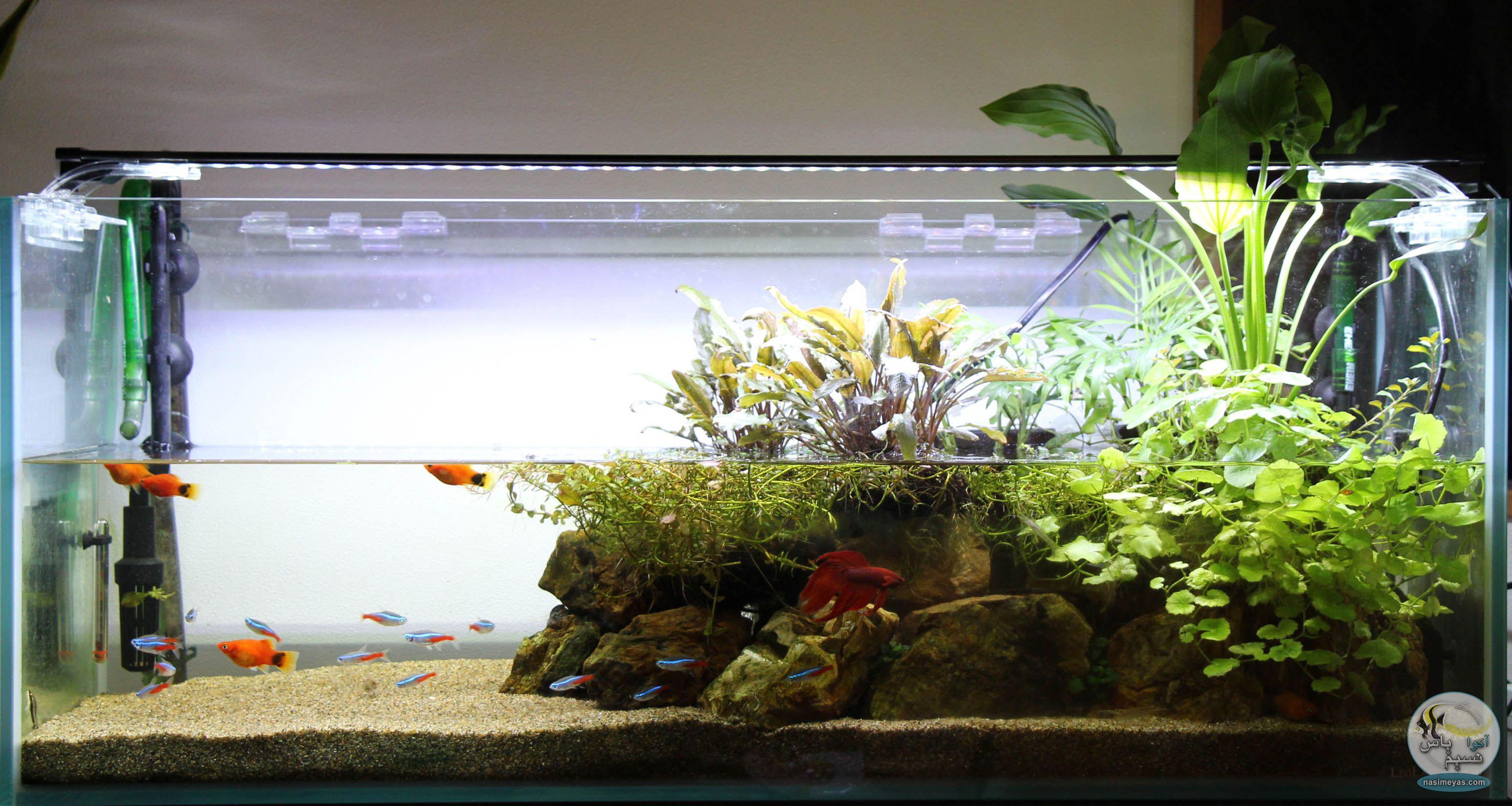 ریپاریوم گیاهی; ابعاد جدیدی از نگهداری گیاهان آکواریومی