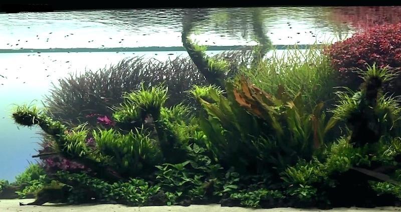 استفاده مناسب از گیاهان با برگ های کوچک و باریک