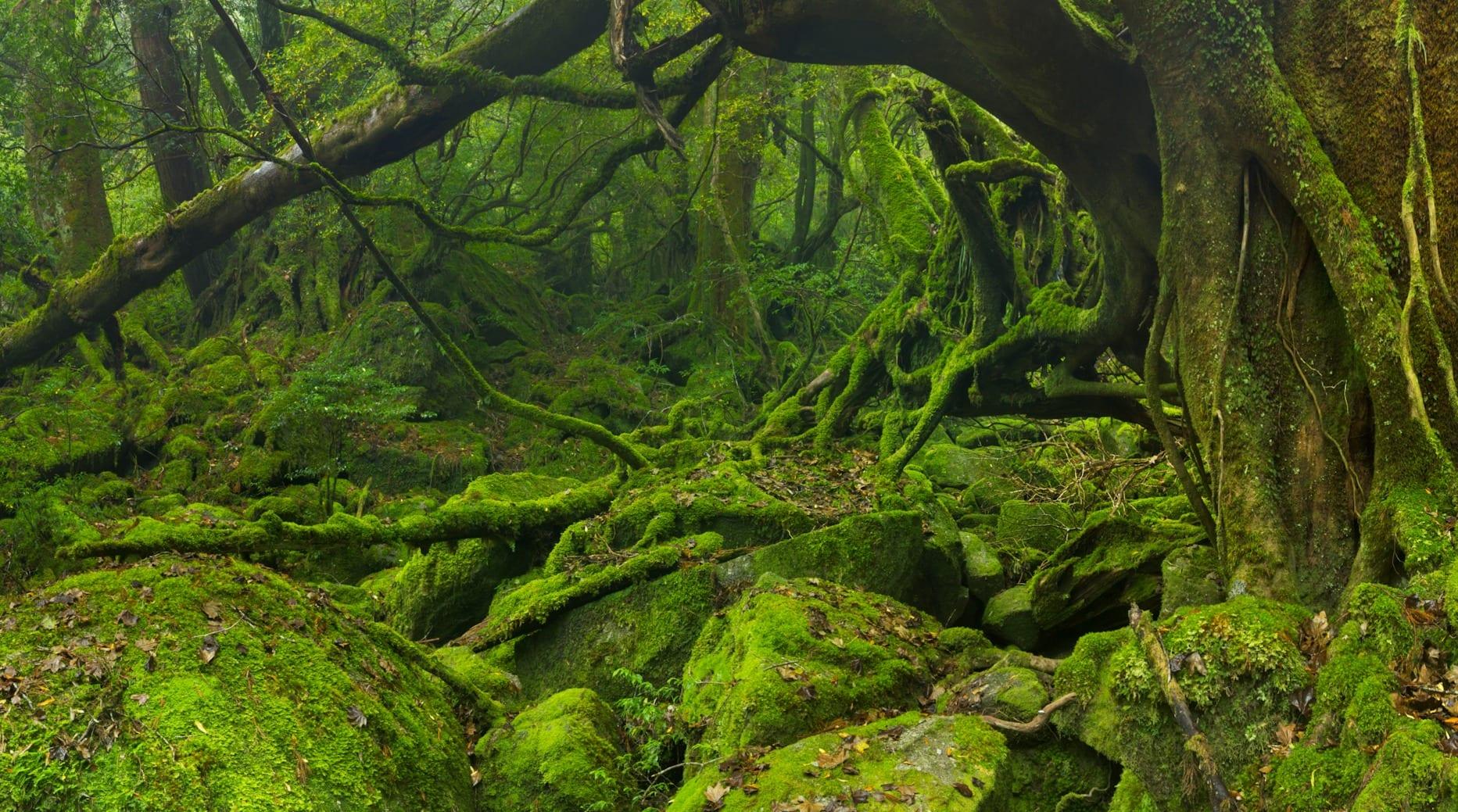 خزه ها در محیط طبیعی عموما در سایه و مکان های کم نور زندگی میکنند