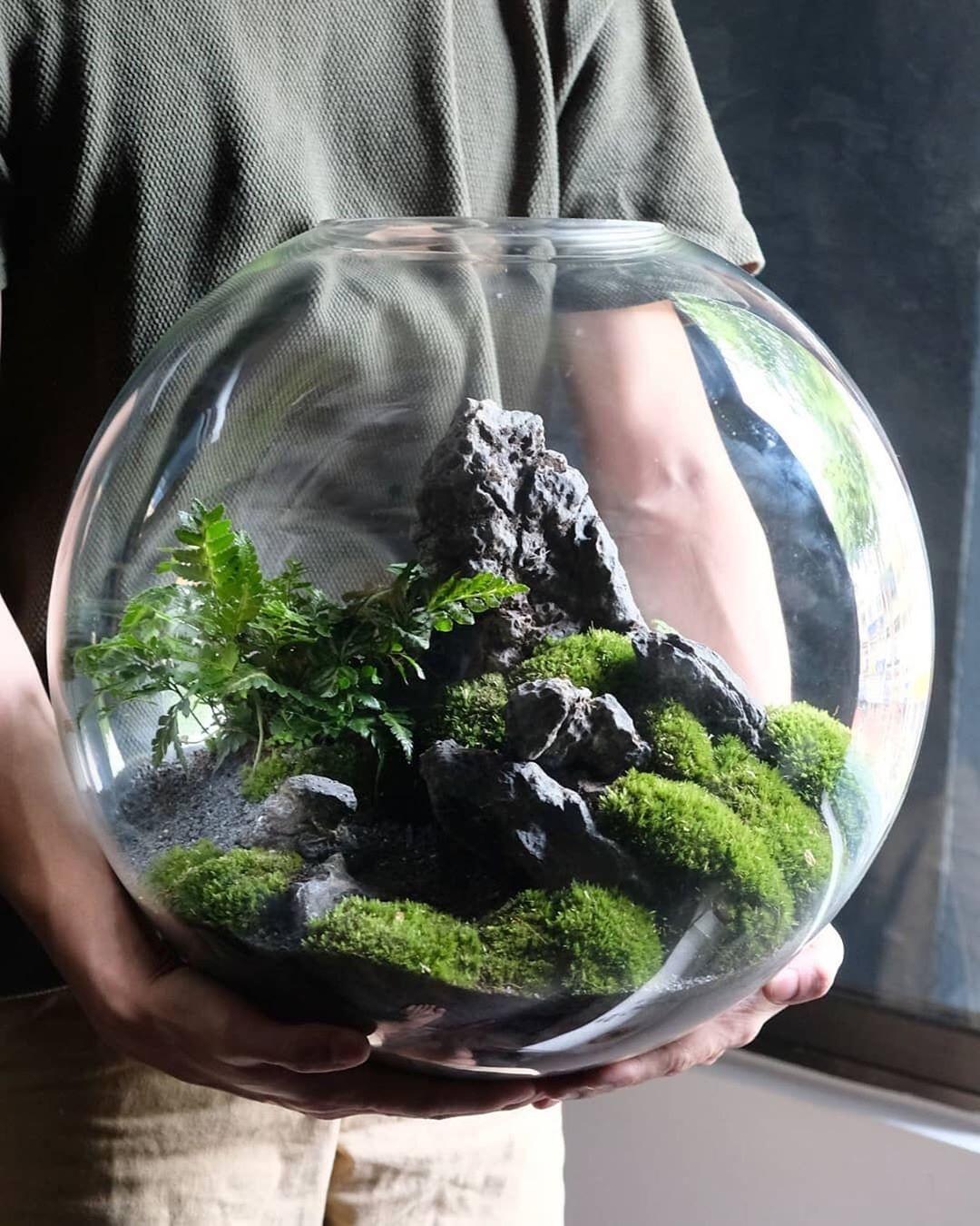 تراریوم در بسته، محل مناسبی برای نگهداری گیاهان استوایی