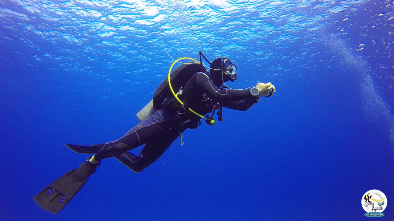 جمع آوری ماهی فرونتوزای آبی زئیر