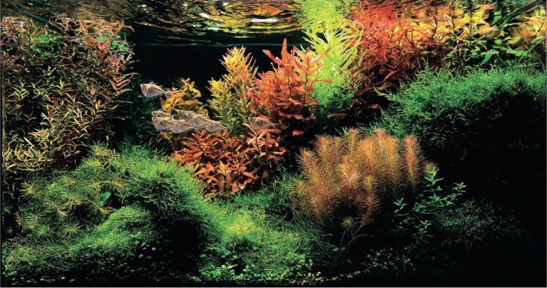 مطالعه رنگ ها در یک اکواریوم طبیعی - بخش اول