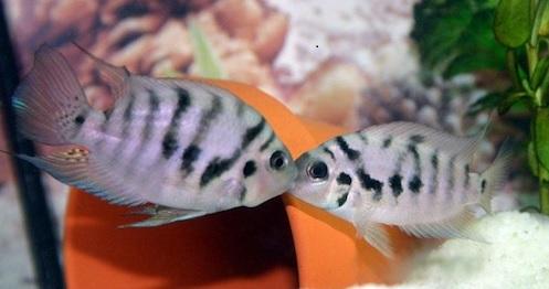 دعوای بین ماهی ها