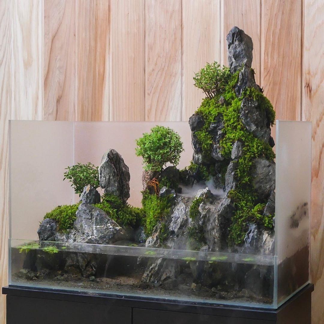 پالوداریوم ها امروزه یکی از جذاب ترین باغ های شیشه