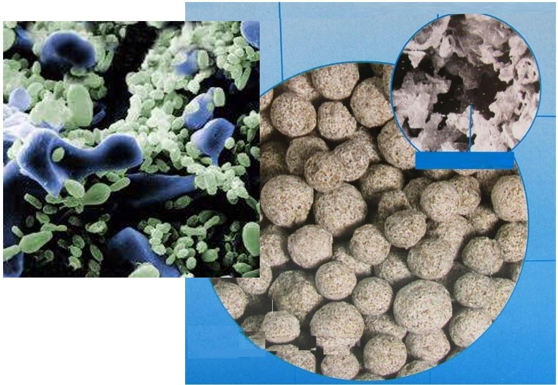 تصاویر میکروسکوپی از فضایی که مدیاهای با کیفیت برای رشد باکتری ها فراهم می نمایند. تصویر چپ نیز حضور و رشد باکتری ها را در این فضاها نمایش میدهد