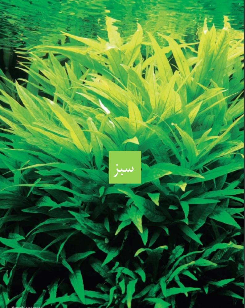 رنگ سبز در آکواریوم