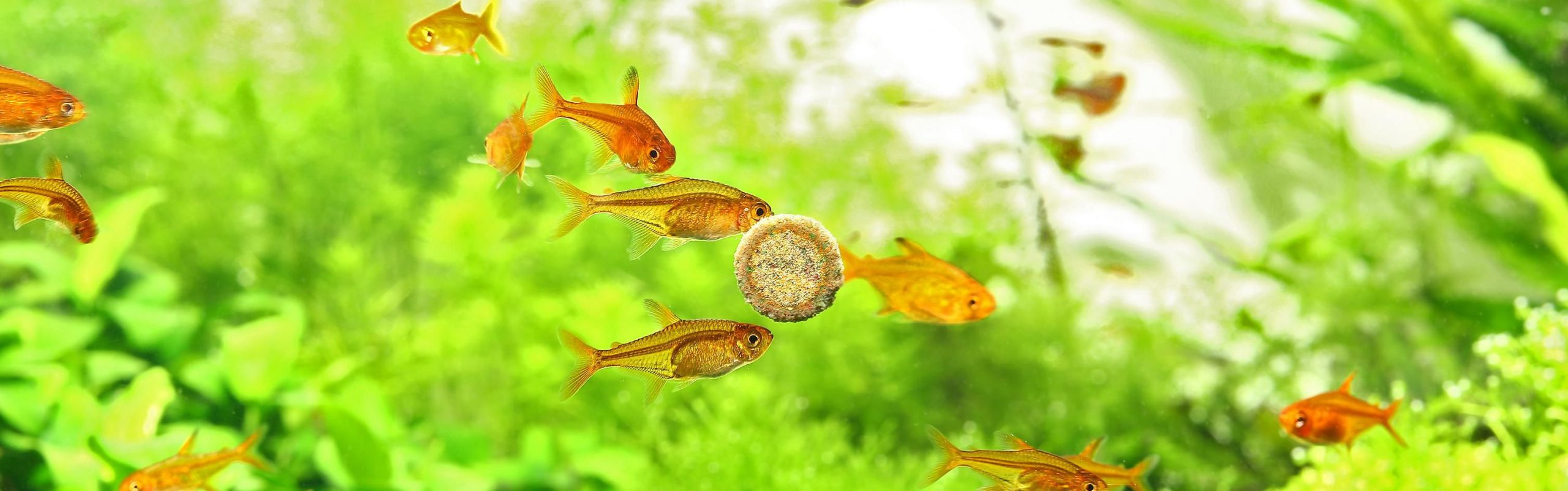 کیفیت بالای غذای ماهی