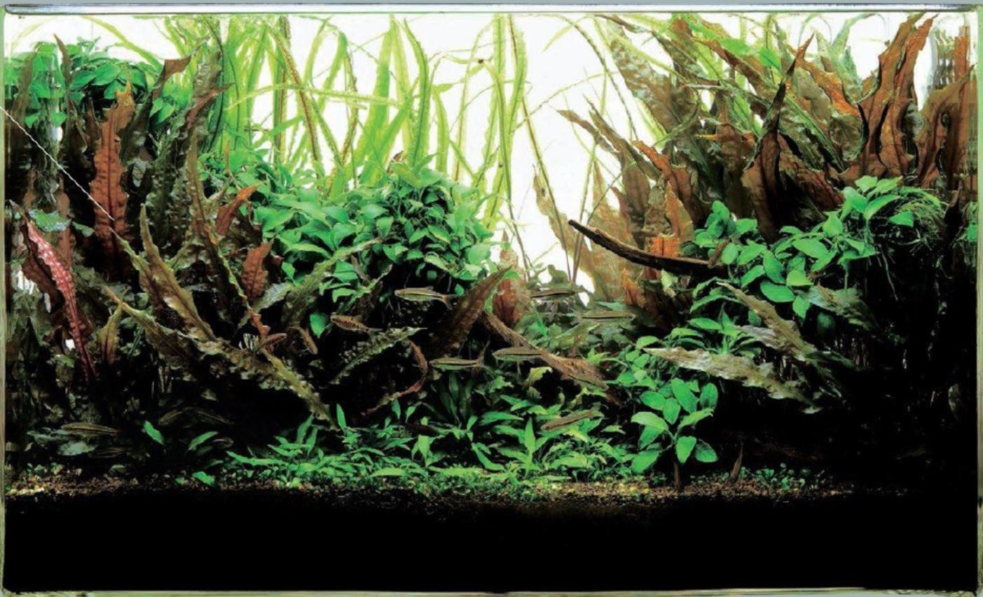 ساخت دکور آرام با استفاده از گیاهان سایه دوست
