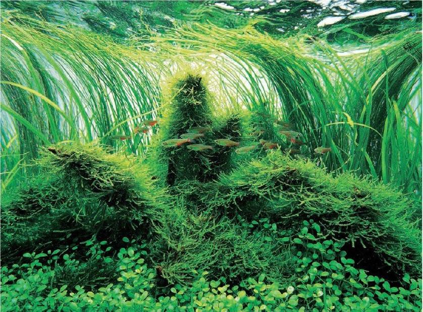 تحلیل برتری های رنگ سبز از دید دکوراسیون آکواریوم