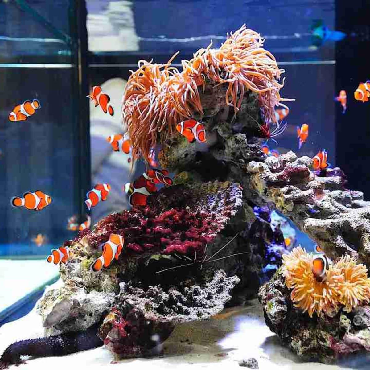 قرنطینه ماهی