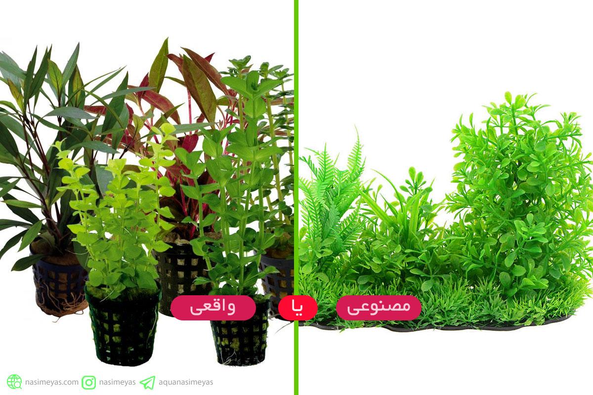 بهترین نوع گیاه برای آکواریوم کدام است ؟ واقعی یا مصنوعی ؟