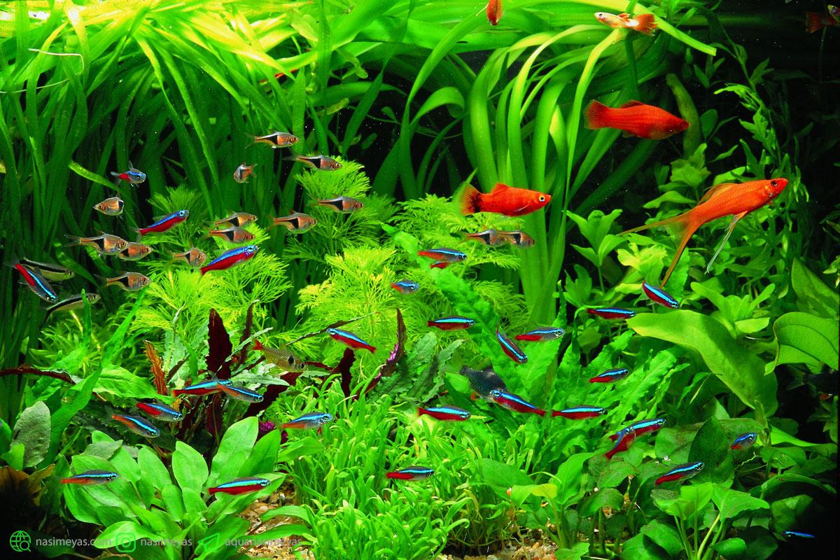 گیاهان زنده ( واقعی ) آکواریوم