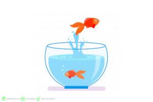 شناخت رفتار پرش ماهی ها از آکواریوم