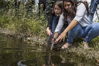اکسولوتل را درون یک حوضچه محافظتشده