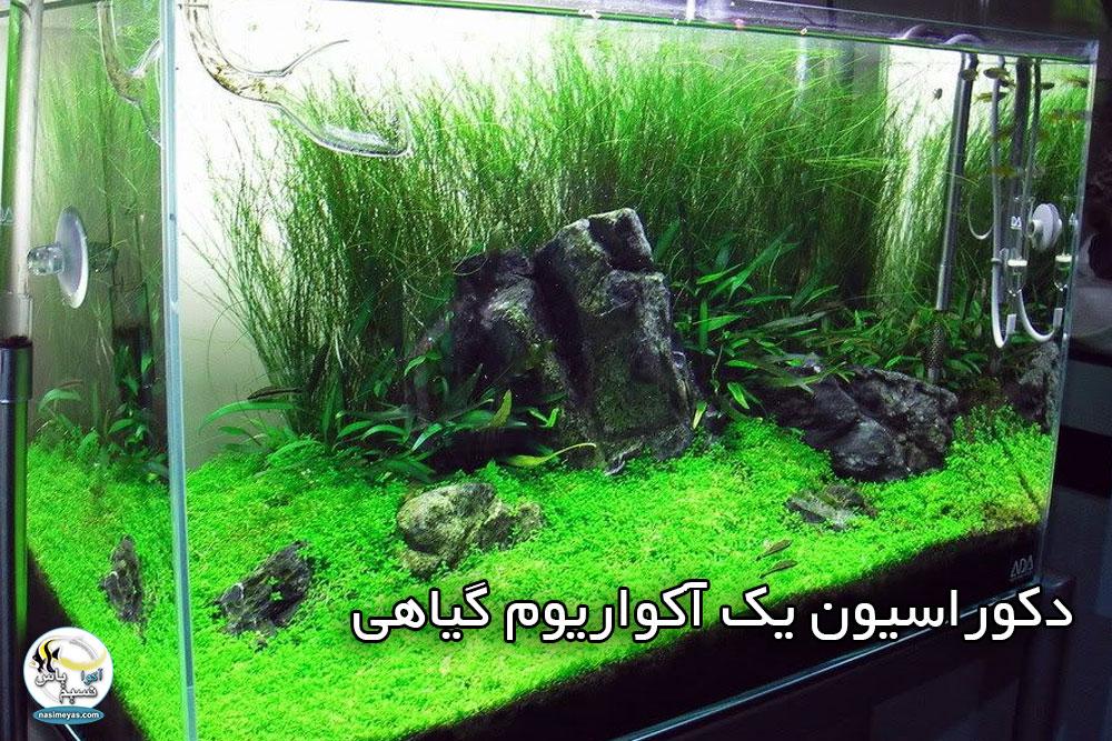 دکوراسیون یک آکواریوم گیاهی با تاکاشی آمانو