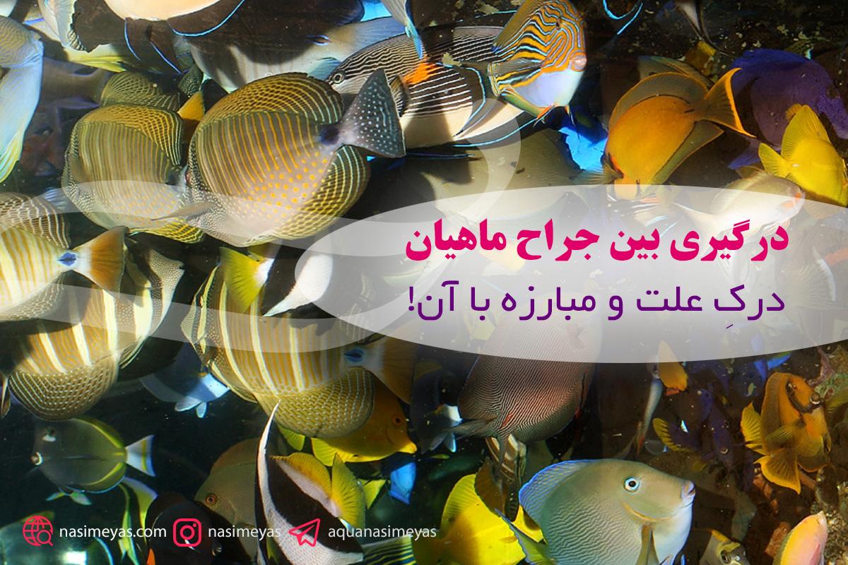 درگیری بین جراح ماهیان – درکِ علت و مبارزه با آن!