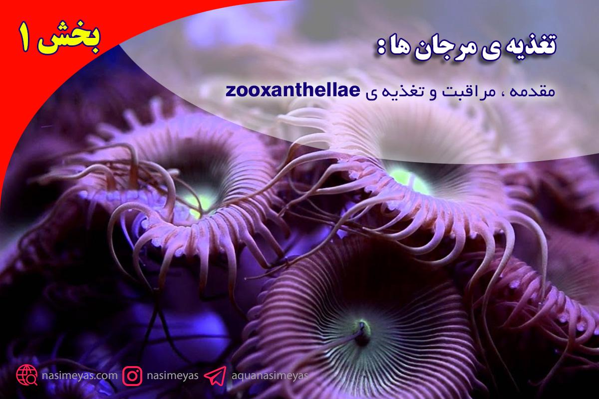 تغذیه ی مرجان ها : مقدمه ، مراقبت و تغذیه ی zooxanthellae