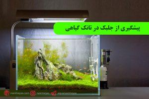 پیشگیری از جلبک در تانک گیاهی