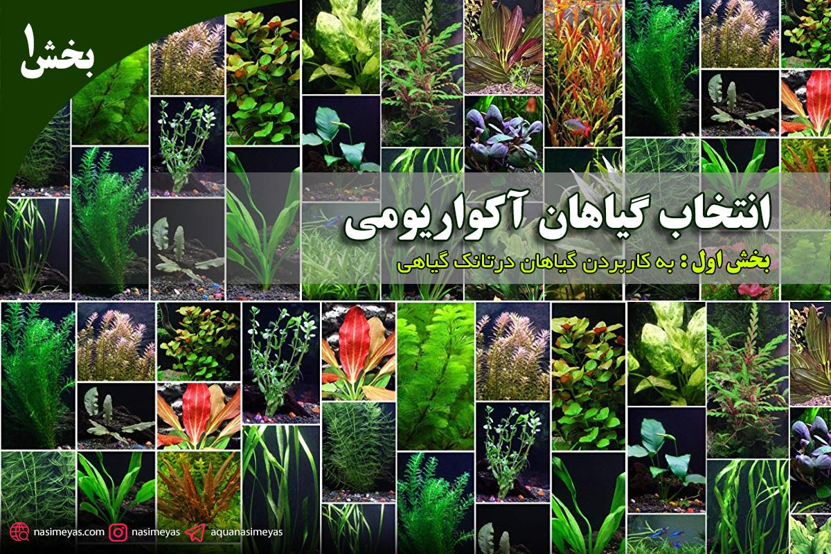 انتخاب گیاهان آکواریومی - بخش اول