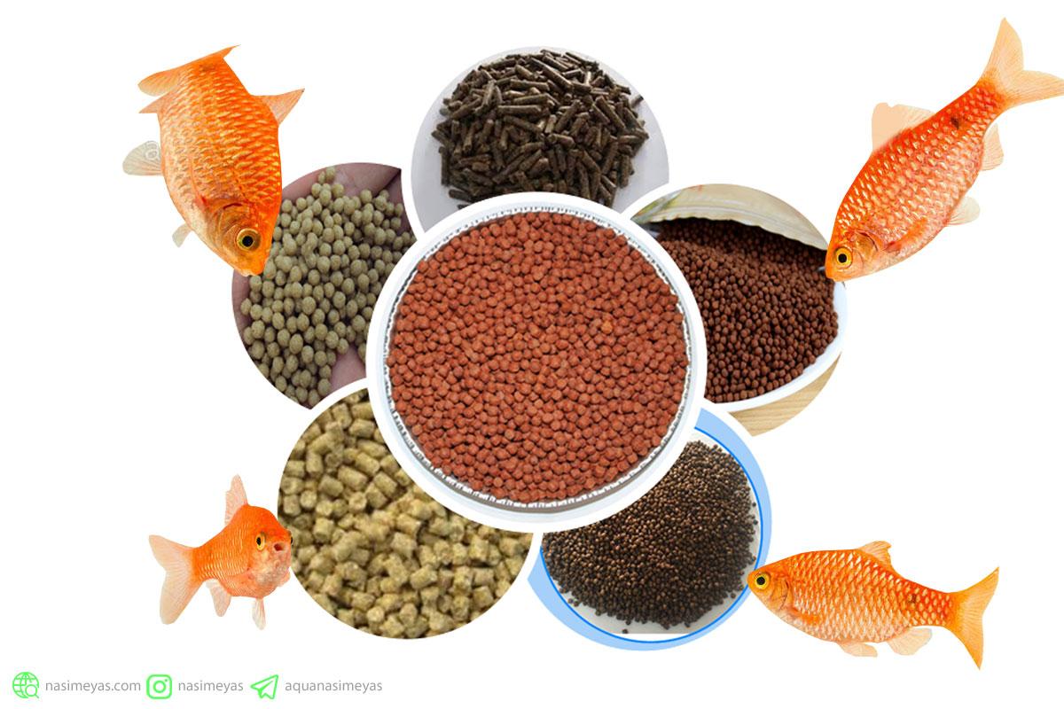 تأثیر غذای ماهی بر کیفیت و شفافیت آب آکواریوم