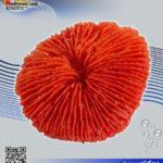 دکور مرجان مصنوعی کد ۱۴۱ کورال کالکشن