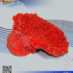دکور مرجان مصنوعی کد ۱۱۹ کورال کالکشن