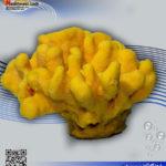 دکور مرجان مصنوعی کد ۱۱۴ کورال کالکشن