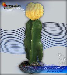 گیاه مصنوعی تراریوم مدل دیزرت 1 فرپلاست