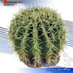 گیاه مصنوعی تراریوم مدل دیزرت ۱۱ فرپلاست