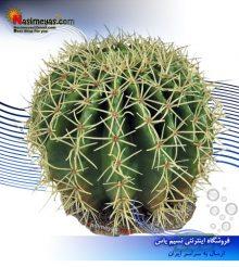 گیاه مصنوعی تراریوم مدل دیزرت 11 فرپلاست