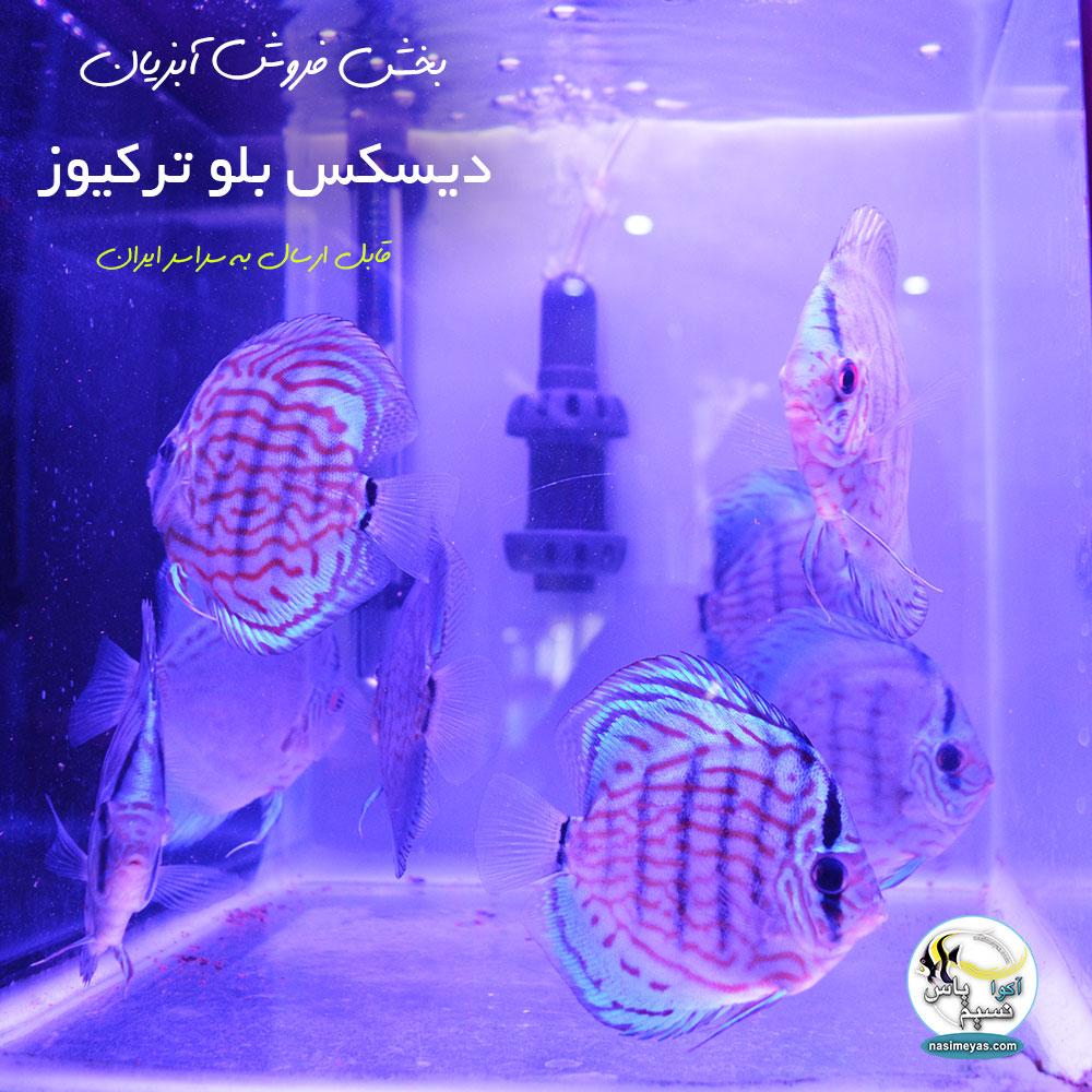 فروش دیکس ایرانی